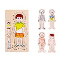 Kids Early Educational Educational Toy Puzzle Wooden Puzzles Human Body Structure Cognitive For Toddlers