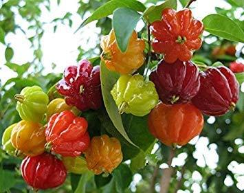 Fash Lady De gros!!!100 piment de piment ornemental chinois, mélange de couleurs (forme spéciale, belle couleur), culture facile, goût spécial