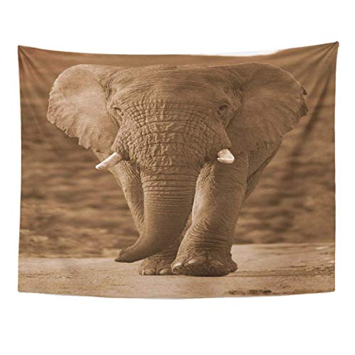 Tapestry Green African Big Elephant Bull Walks Towards The Camera in This Monochrome Taken South Africa Abstract Home Decor Wall Hanging for Living Room Bedroom Dorm 60x80 inches -