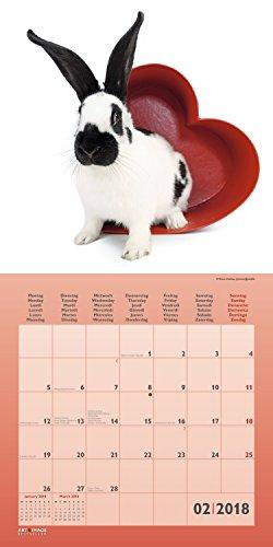 Kaninchen 2018 – Tierkalender, Kaninchen-Kalender, Hasenkalender, Haustierkalender  –  30 x 30 cm - 3