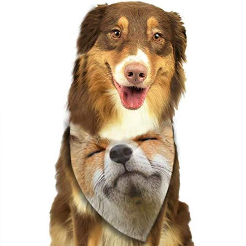Hipiyoled Cute Funny Pet Schal Sun Fox Adjustbale Pet Bandanas Kragen Dreieck Halstuch