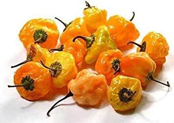 Farmerly 25Ct of Scotch Bonnet Seeds, Orange, Heirloom Hot Pepper Seeds, Jamaican Peppers