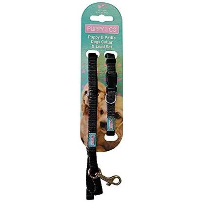 Pup & Co Nylon Puppy Dog Walking Lead & Collar Set 2
