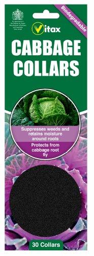 Vitax Paquet de 30 colliers à chou Biodégradables - Protège les plantes des mouches de pourriture de choux