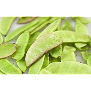 Portal Cool Uk: F1 HyazintheDolichos Lablab Lila grüne Bohnen, Bangla Aina Urie Seeds