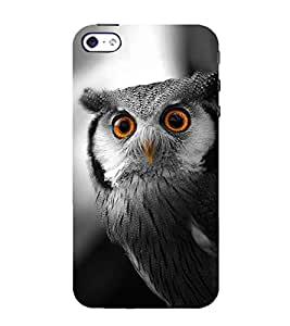 FUSON White Faced Scops Owl 3D Hard Polycarbonate Designer Back Case Cover for Apple iPhone 5S