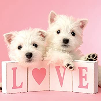 Westie Love Birthday Card Amazon Office Products