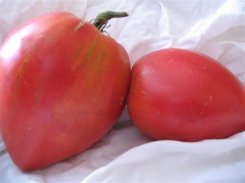 Alte Russische Tomate -Anna Russian- 10 Samen