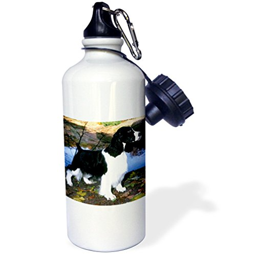 3dRose wb_949_1 Black and White Springer Spaniel Sports Water Bottle, 21 oz, White