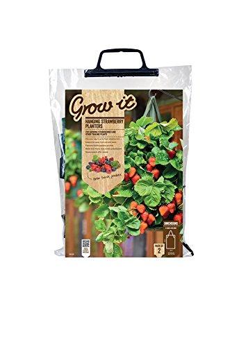 Gardman 09128 pianta fragole rampicanti, due sacchi