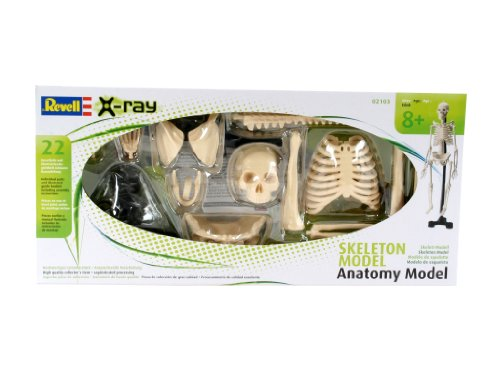 X-ray Experimentiermodelle 02103 - Menschliches Skelett