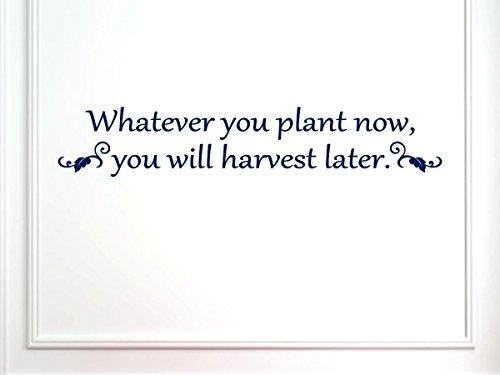 vinylsay glänzend dunkelblau Wand decal-whatever Sie Pflanze jetzt, 33 X 6-inch, Gloss Dark Blue - 6-zoll-decal