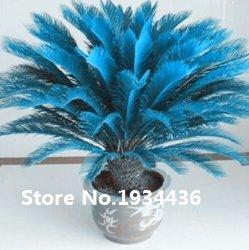 ¡¡¡Gran venta!!! semillas raras Azul Cycas, sagú palmera, flor bonsai, la tasa...