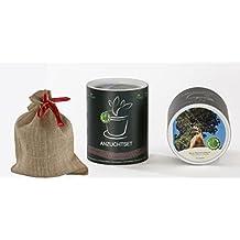 Seedeo Anzucht-Geschenkset Berg-Mammutbaum (Sequoiadendron giganteum)