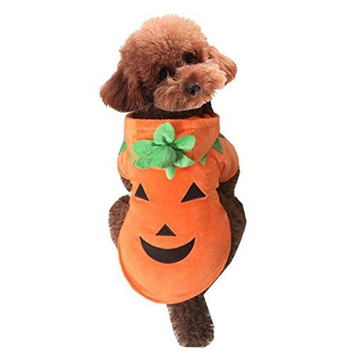 JiaYue Haustier Kostüm Weihnachten Halloween Cut Kaschmir Kürbis Hund Kleidung , Orange , (Nobbies Kostüme Halloween)