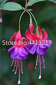 ischen Fuchsia Bonsai Garten Balkon Bonsai Laternen Blumen Spectabilis Topfblüte DIY Pflanze Bonsai: 23 ()