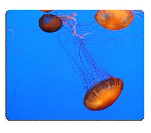Liili Mauspad Naturkautschuk Mousepad Bild-ID: 618644Schwimmende orange Quallen die Rückseite des Mobiltelefons A blau Hintergrund von Wasser (Orange Quallen)