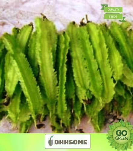 Pinkdose Gemüsesamen Bohnen-Samen - Winged Bohnen-Samen-F2 Hybrid für kleine Küche Garten HomPinkdose Seeds Seed