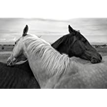 Amazon.fr : cheval poster