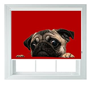 Pug Puppy Red Various Sizes Black Out Roller Blinds for Bedrooms Bathrooms Kitchens and Caravans AOA® (pug 5ft)