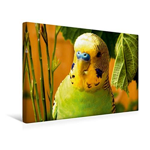 Calvendo Premium Textil-Leinwand 45 cm x 30 cm Quer Wellensittich - natürliche Ernährung mit Gräsern! | Wandbild, Bild auf Keilrahmen, Fertigbild auf Echter Leinwand, Leinwanddruck