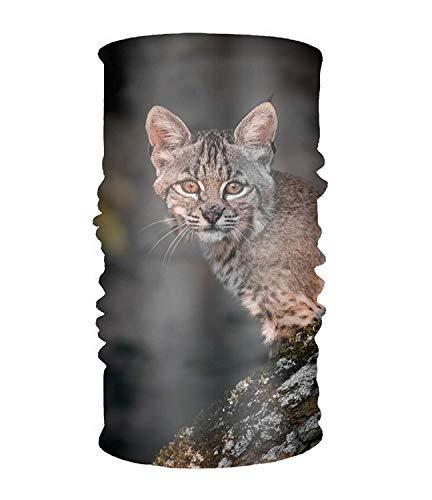 Wfispiy Headband Animal Lynx Cats Sweatband Tube for Riding, Off Roader, Biker, Yoga - Thermische Spandex