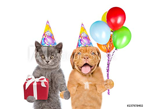 otiv: Cat and Dog in Party hat Holding Balloons and Gift Box. Isolated on White Background #237978402 - Bild auf Forex-Platte - 3:2-60 x 40 cm / 40 x 60 cm ()