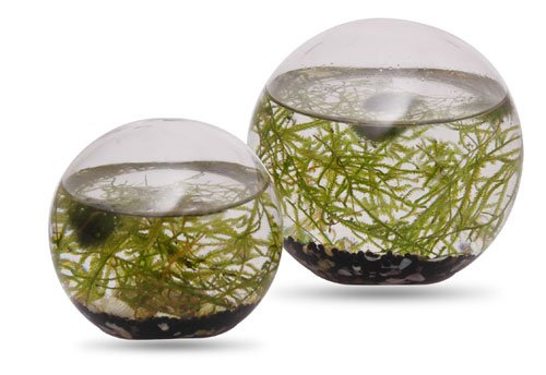 Ornarium Wasserpflanzen kleines Ei 13cm