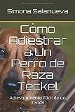 Cómo Adiestrar a Un Perro de Raza Teckel: Adiestramiento Fácil de un Teckel