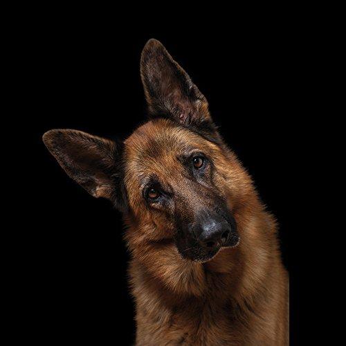 Apple iPhone 6 Hülle Silikon Case Schutz Cover Schäferhund Hund Dog Hard Case weiß
