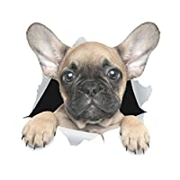 Winston & Bear 3D Dog Stickers - 2 Pack - Cute French Bulldog Sticker Wall, Fridge, Toilet More