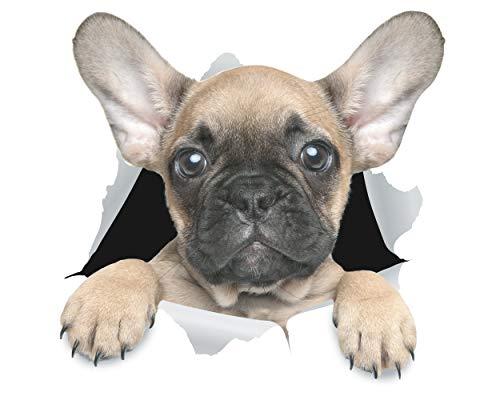 Winston & Bear Stickers 3D perro lindo Bulldog Francés - Pack 2 - adhesivo para la pared, nevera