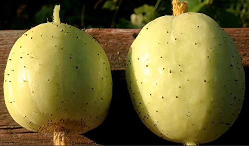 Gurke Crystal Lemon – 50 Samen