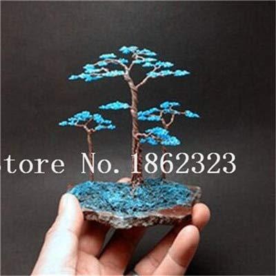 bloom green co. bonsai 50 pz giapponese ginepro bonsai starter albero juniperus procumbens nana pianta in vaso per la casa & amp; garden facile da coltivare: 2