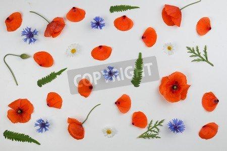 Leinwandbild RahmenPoppy Flowers