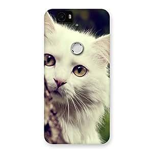 Enticing Hiding Cat Multicolor Back Case Cover for Google Nexus-6P