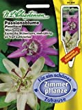Passionsblumen-Mix (Portion inkl. Stecketikett)