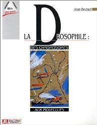 La Drosophile: Des chromosomes aux molécules