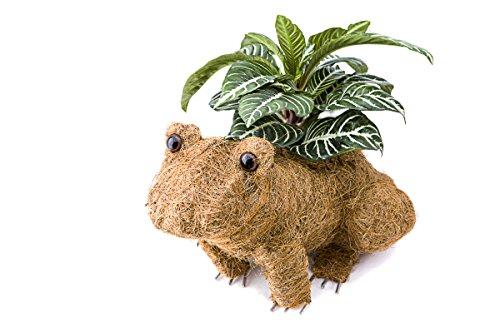 Ultimate Animal topairy Coco Pflanzgefäße, Übertopf auf die Veranda, Terrasse, Deck und Blumenbeeten frosch -