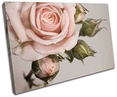 Bold Bloc Design - Rose shabby chic Vintage - Canvas Art Print Box Framed Picture Wall Hanging - Hand Made In The Uk - Framed And Ready To Hang