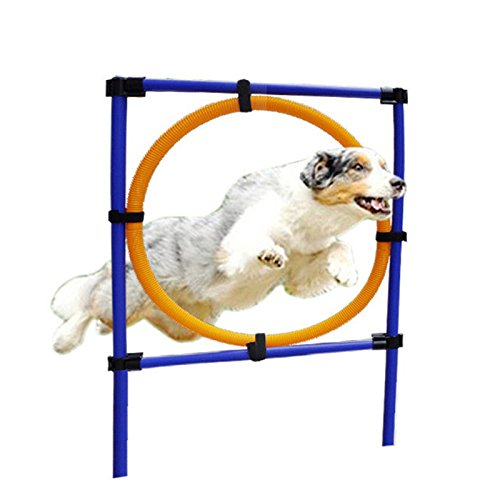 yunt Agility de equipo para perros desmontable tragebares desmontable parte zueg Saltar de entrenamiento con anillo de nevera de plástico Dog Agility Entrenamiento