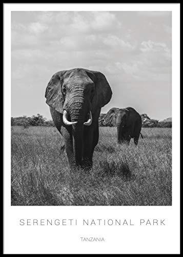 Artesta Póster de Elefantes