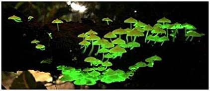 New! Glow in the Dark Mushroom Growing Habitat Kit