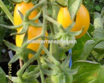 """Ungarische Samen Tomate""""Zitronentomate"""", von unserer ungarischen Farm samenfest, nur organische Dünger, KEINE Pesztizide"""