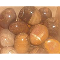 Petrified Wood Smooth Tumblestones - Large by Gifts and Guidance preisvergleich bei billige-tabletten.eu
