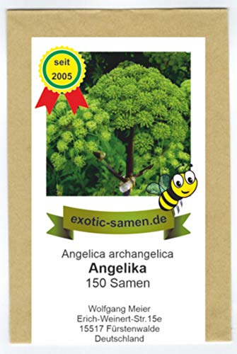 Arznei-Engelwurz - Echter Engelwurz - Angelica archangelica - Gewürz- und Arzneipflanze - 150 Samen