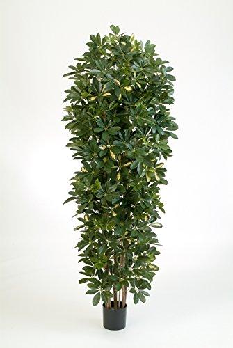 Set 2 x Deko Schefflera – Säule am Stamm, getopft, grün – weiß, 200 cm – Künstliche Schefflera / Kunstpflanzen – artplants