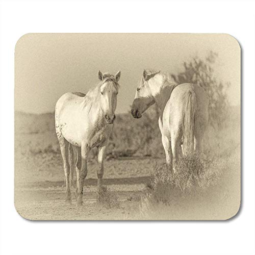 Deglogse Gaming-Mauspad-Matte, Beach Agility Portrait of The White Camargue Horses in Parc Regional De Provence France Retro Animal Mouse Pad White Beach Portrait