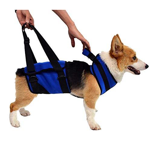 Haltung-support-weste (Dog Lift Harness, Dog Lift Support Rehabilitationsgeschirr Pet Walking Aid Lifting Pulling Weste Sling mit Einstellbarer für ältere oder Arthritis Hunde,M)