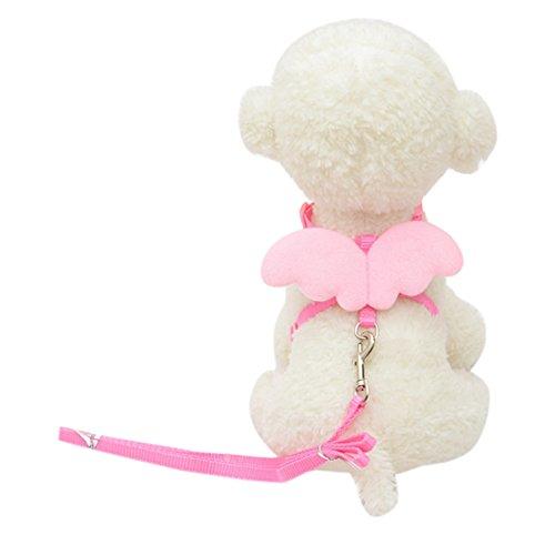 LHWY Süße Angel Haustier Hund führt und Halsbänder für Kleine Designer Wing einstellbar (S, Rosa) (Schlange Designer-schuhe)